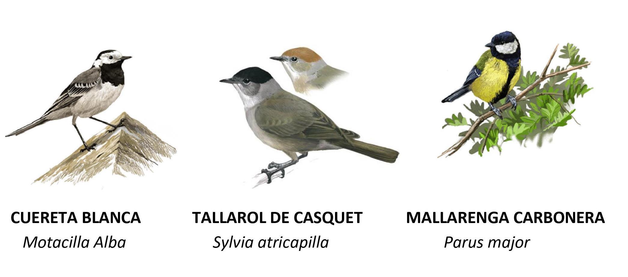 Quin ocell canta 66
