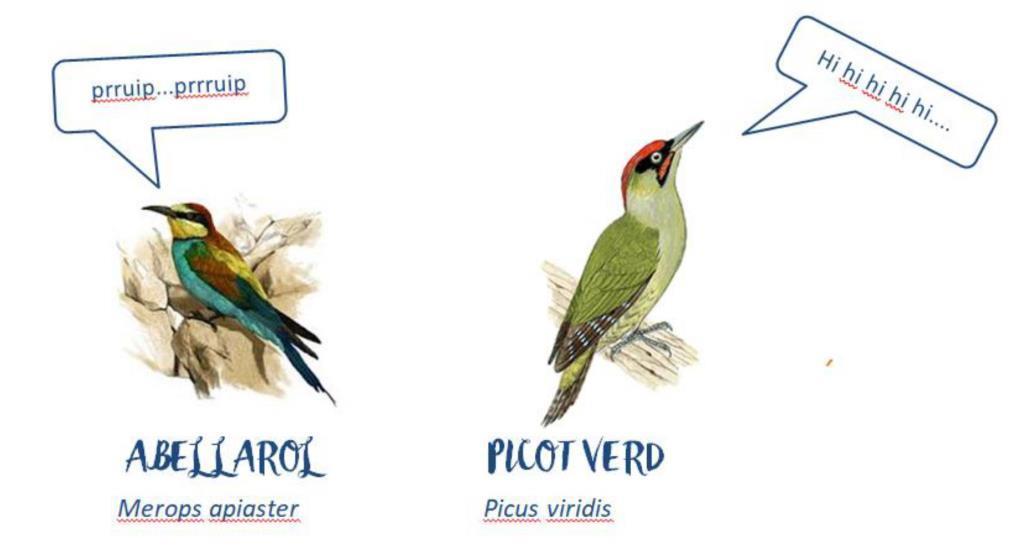 Quin ocell canta 9 imatges
