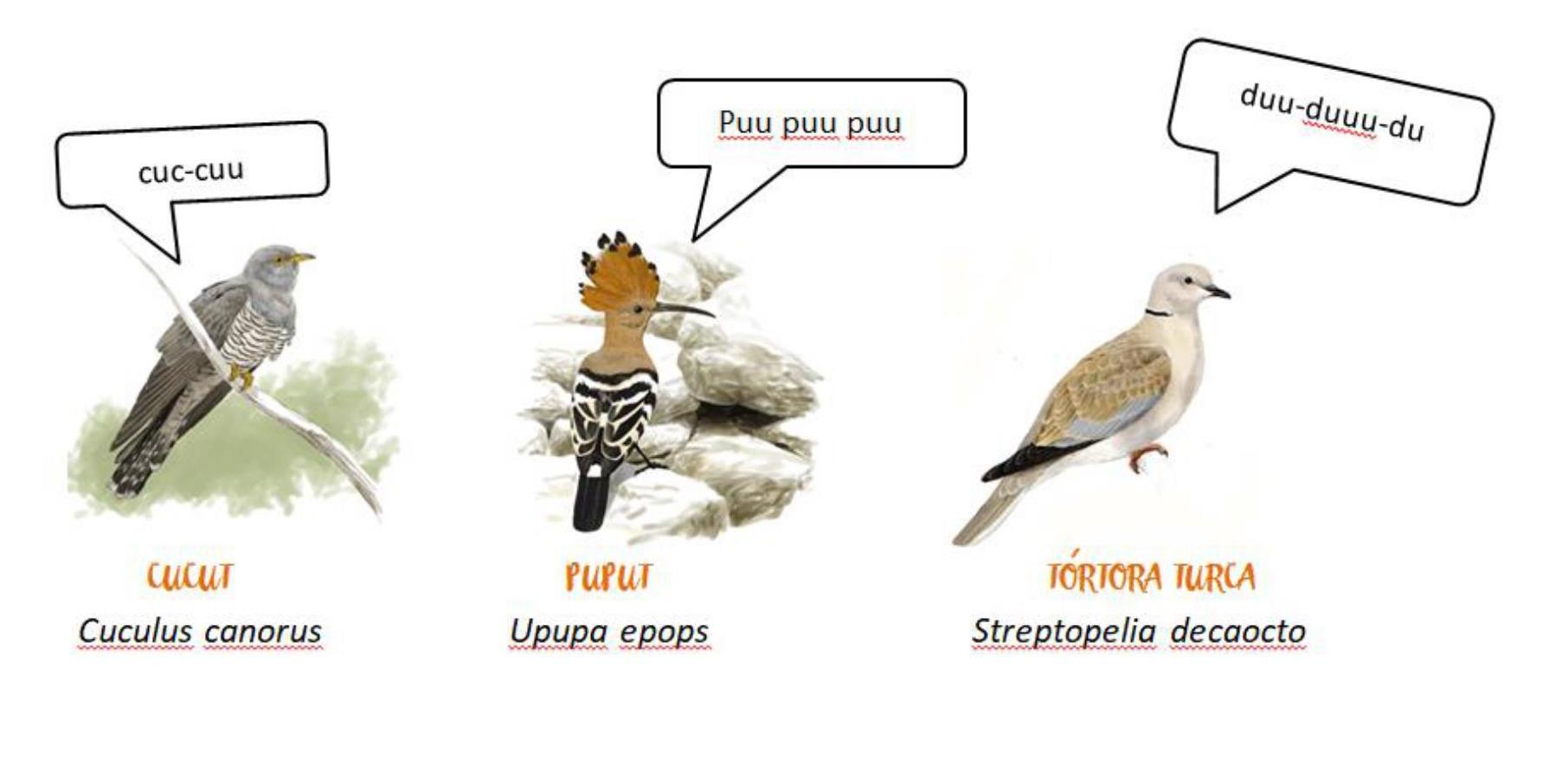 quin ocell canta 8 imatges